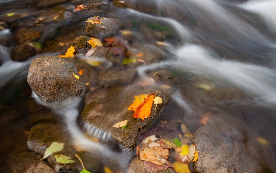 Leaves on a Stream – Guided Meditation for Teens